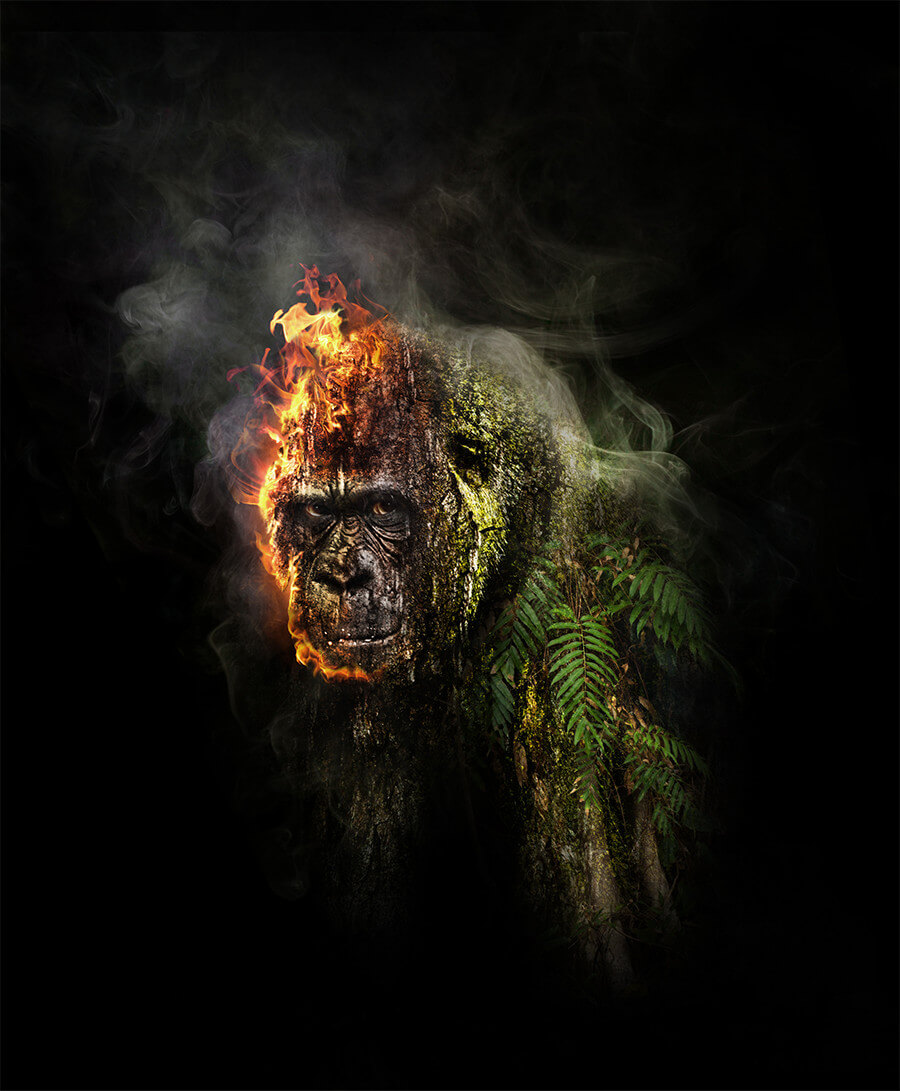 Stop destroying the Rainforest - Photoshop Artwork von Thomas Schiffmann